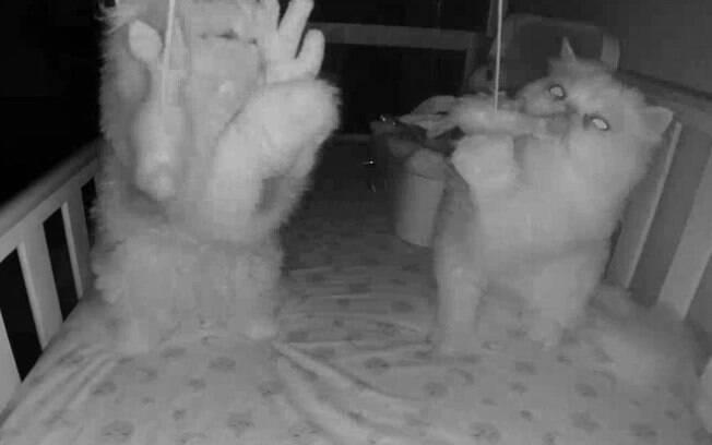 Câmera flagra gatos invadindo berço de bebê e usando brinquedos dele