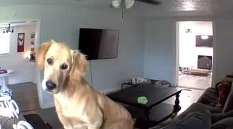 Cachorro ouve a voz do dono vindo de câmera e fica intrigado