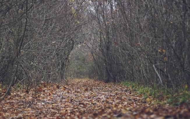 Caminho na floresta de Hoia-Baciu