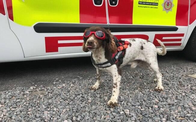O cão de resgate Diesel faz sucesso na redes sociais com seu equipamento fofo de salvamento