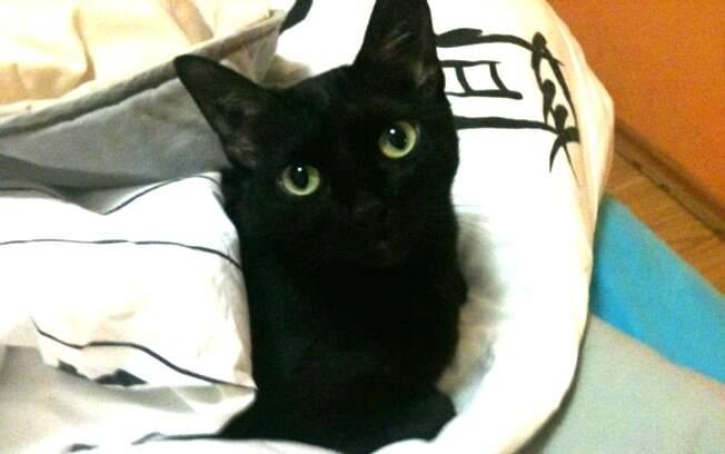 Jéssica adotou o gato preto Pixel e acredita que seja seu pet mais carinhoso