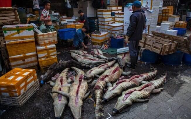 Crocodilos em exposição para compradores no mercado de frutos do mar de Huangsha em Guangzhou, província de Guandong, China