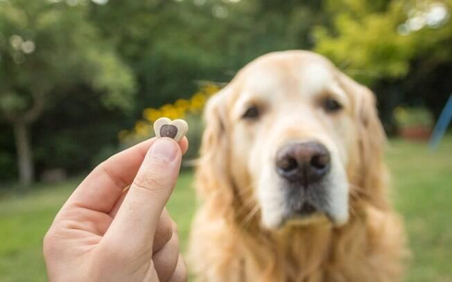 A recompensa de um cachorro não precisa ser necessariamente um petisco