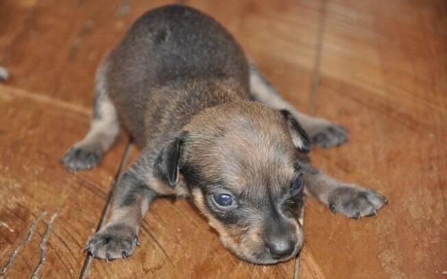Um cachorro tremendo pode sinalizar um problema de saúde mais sério