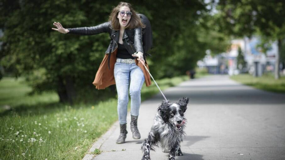 Qualquer coisa pode distrair seu cão, por isso é importante usar a coleira