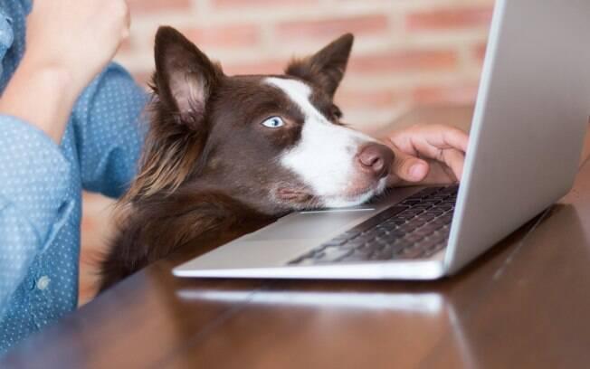 Pets podem ser benéficos durante isolamento social, diz pesquisa