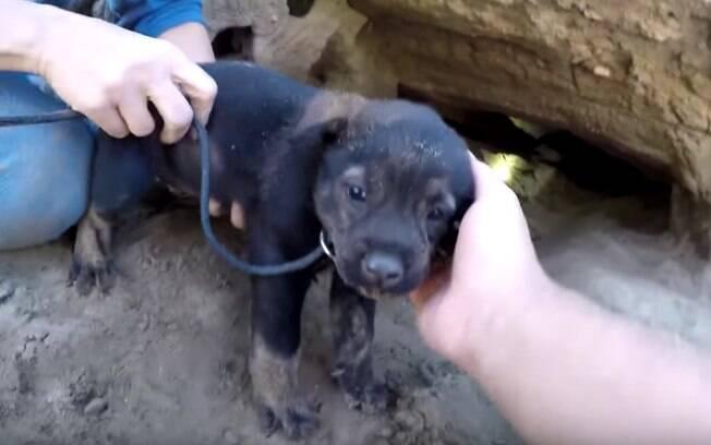 Homem resgata 9 filhotes de cachorro de uma pequena caverna