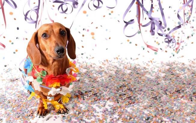 Seu cachorro pode aproveitar o Carnaval 2019 ao seu lado