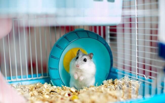 Hamsters são animais fofos, muito inteligentes, e bastante curiosos