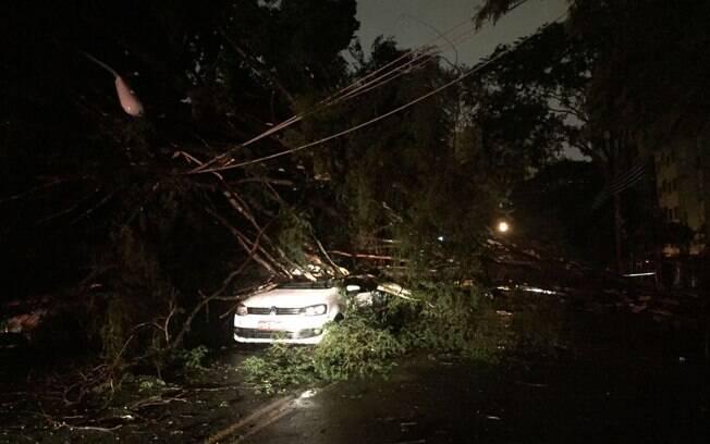 Queda de árvore atinge carro na Alameda Barão de Limeira, região central de São Paulo
