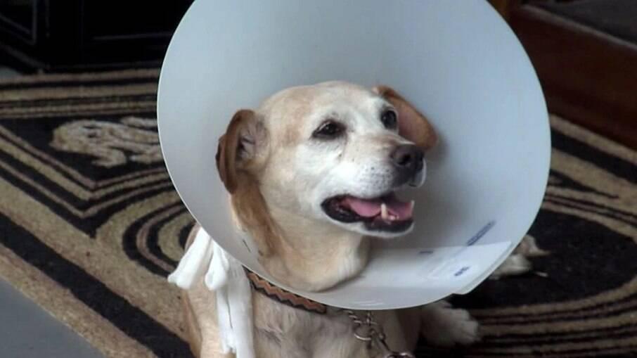 Hanna passou por tratamento médico e está se recuperando em casa