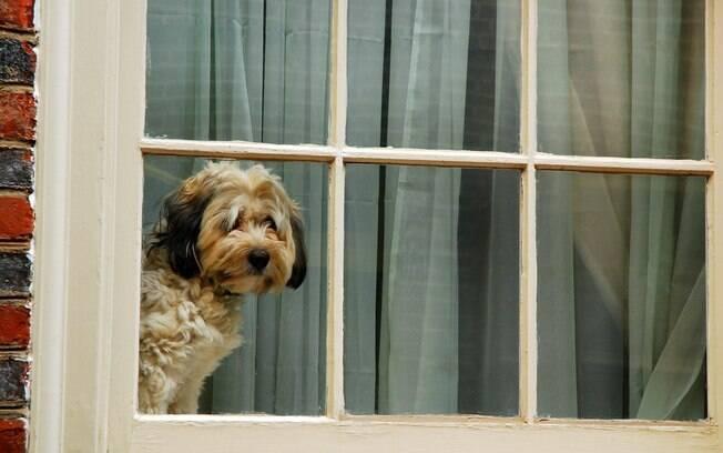 O ato de se despedir do cachorro também pode fazer com que ele fique o tempo inteiro triste esperando pela volta do dono