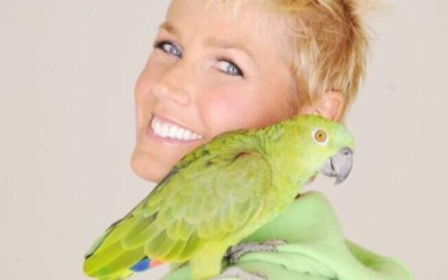 Xuxa e seu papagaio, Luigi