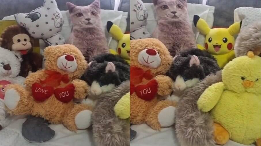 Tente encontrar o gatinho escondido