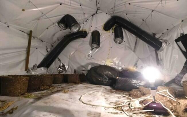 Polícia de Merseyside ressalta que plantações eram mantidas com equipamentos de iluminação que estavam escondidos