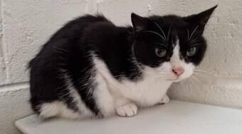Gato é encontrado jogado na beira de estrada da Escócia
