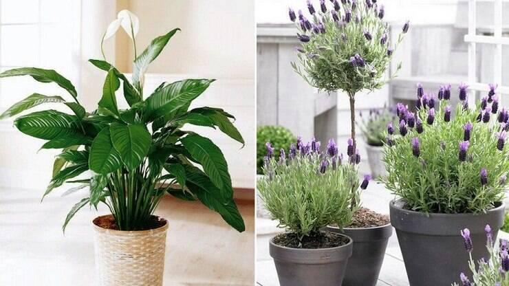 Decora o com plantas veja 14 esp cies que fazem bem for Plantas para dentro de casa sombra