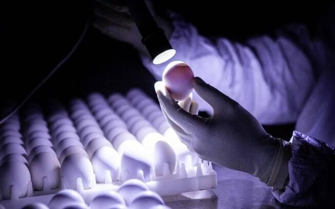 Os desafios da ButanVac, que vai usar 20 milhões de ovos de galinha para produzir 40 milhões de vacinas