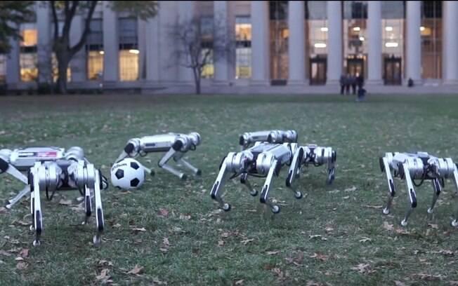 Gatos robôs foram desenvolvidos pelo MIT