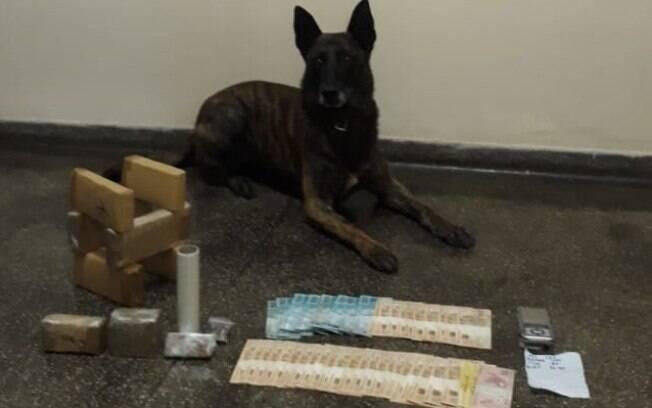 Cão Aruck do Canil da PM no combate ao tráfico de drogas