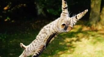 É verdade que os gatos sempre caem de pé?