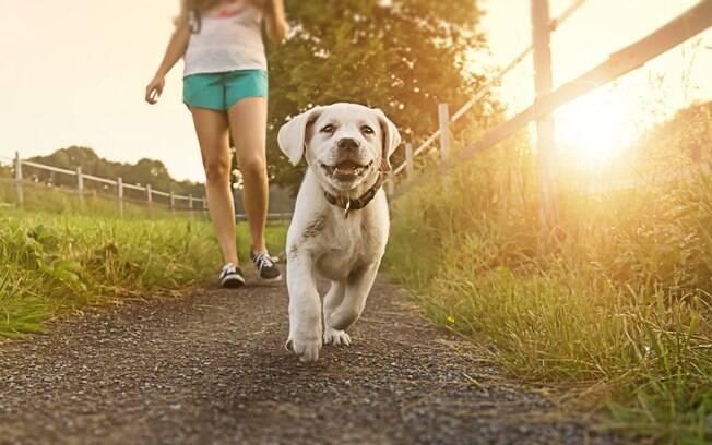 Apesar de todos os riscos, você pode passear com o pet sem coleira. Porém, o animal precisa de adestramento e os locais devem se escolhidos conscientemente