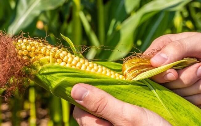 3 simpatias com milho para atrair prosperidade