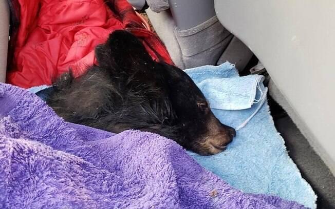 Urso depois de resgate