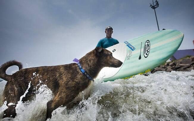 Parafina, o cachorro surfista.