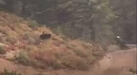 Ciclista foge em disparada de ataque de urso