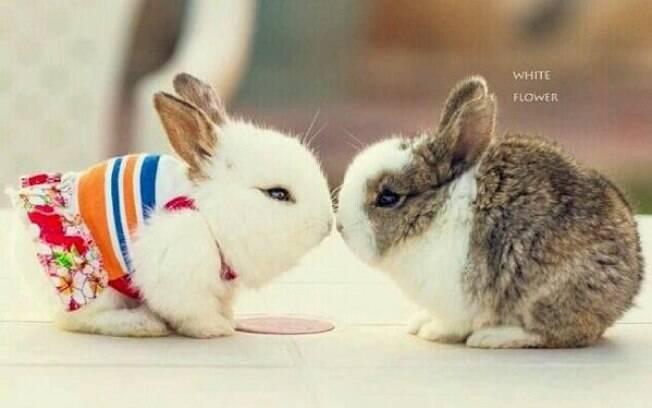Fotos de coelhinhos fofos