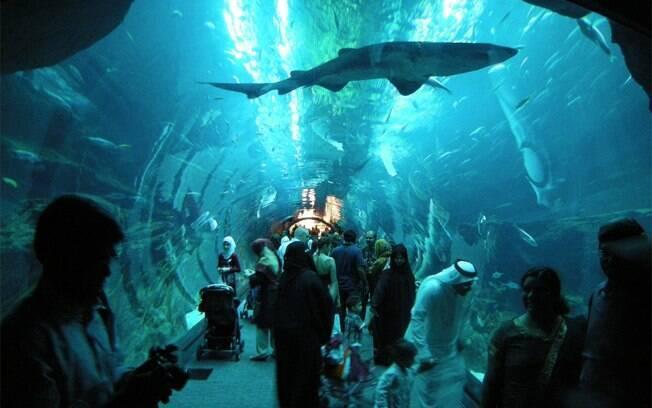 Pelo túnel de acrílico de 180º, os peixes passam sobre a sua cabeça no aquário de Dubai