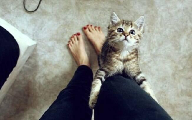 Uma gata no cio se torna muito mais carente