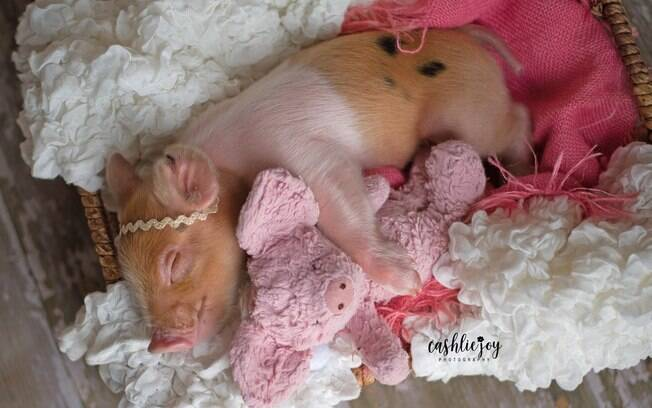 Sessão de fotos de porquinha encanta Internet