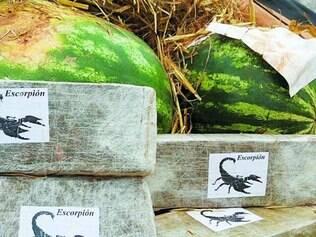 381. Em outubro, a PRF apreendeu 2,5 toneladas de maconha em um caminhão carregado com melancia