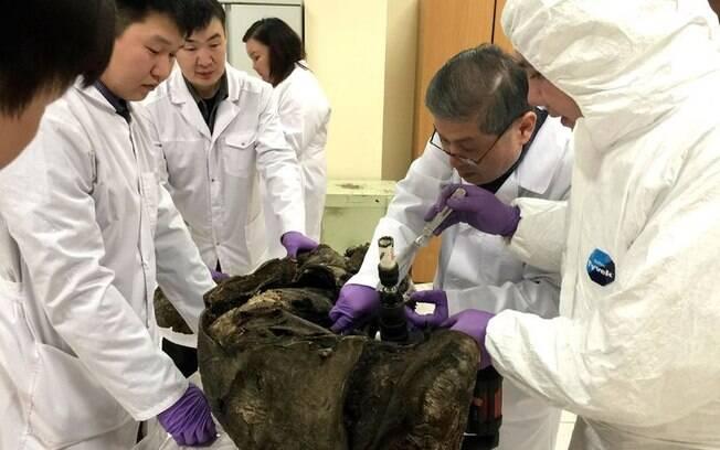 Pesquisadores russos e sul-coreanos analisaram DNA de animais congelados há anos a fim de recriar Jurassic Park