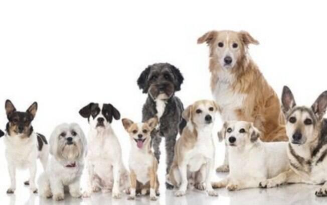 O signo de cachorro pode influenciar o comportamento de muitos cães