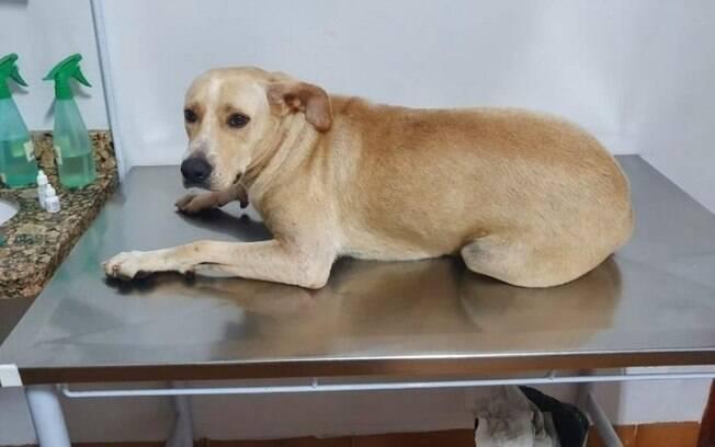 Cadela foi encaminhada para clínica veterinária e exames comprovara o abuso sexual