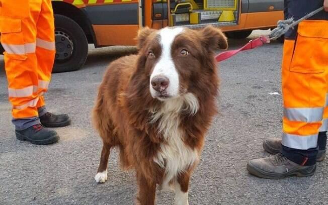 Piqué, o cachorro pastor, foi resgatados por funcionários de manutenção de uma rodovia