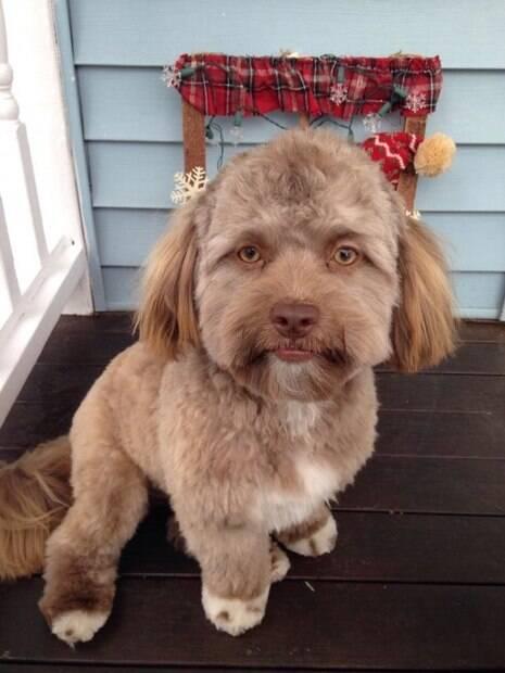 Cão com aparência humanoide tem chamado a atenção das redes sociais
