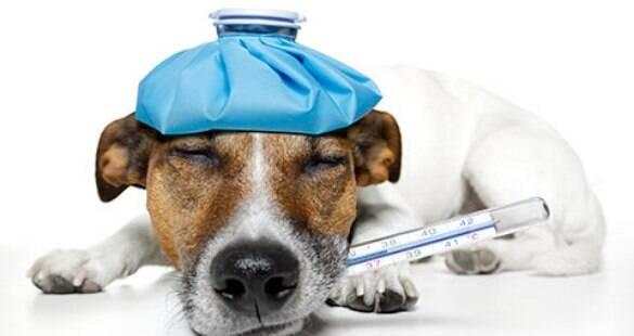 Saiba como evitar e tratar a giárdia nos animais de estimação