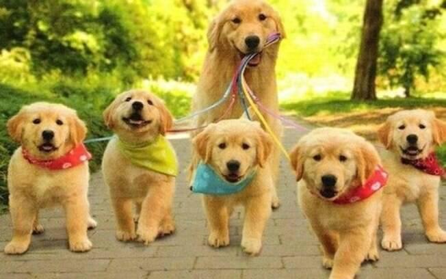 Algumas dicas podem te ajudar a escolher um passeador de cães