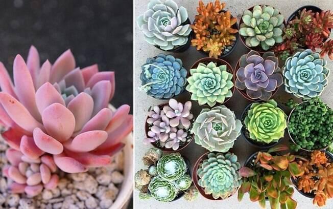 Naturais de regiões secas e quentes, as suculentas não requerem muito cuidado e combinam com a decoração invernal