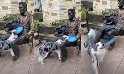 Cachorro tenta brincar com estátua, mas acaba ignorado pelo novo amigo
