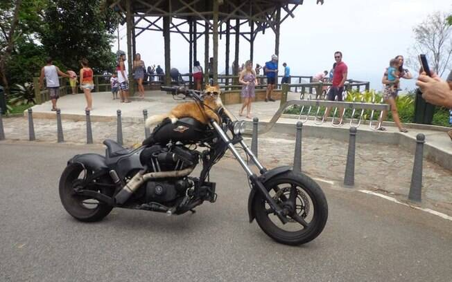 Chiquinho é um sucesso nas redes sociais por ser um gato motoqueiro