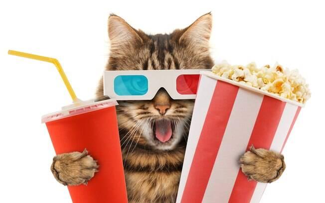 5 filmes com gatos para assistir em qualquer momento