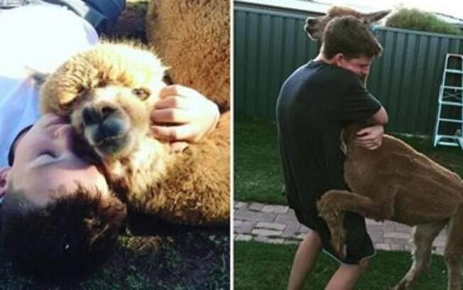 Jovem de 14 anos consegue convencer os pais a adotar uma alpaca.