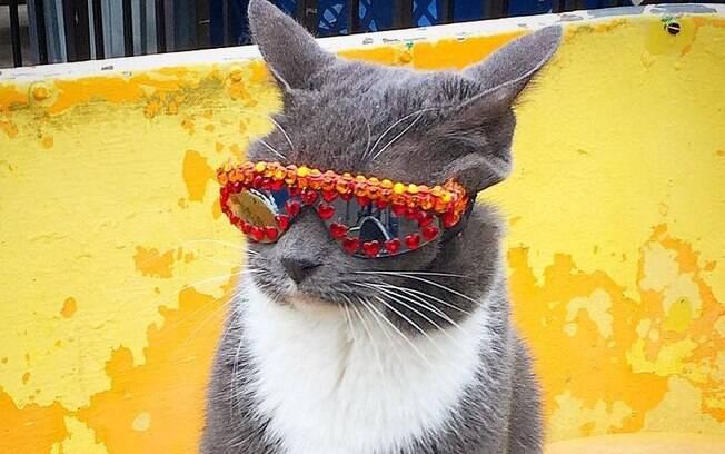 Bagel, a gata de óculos escuros