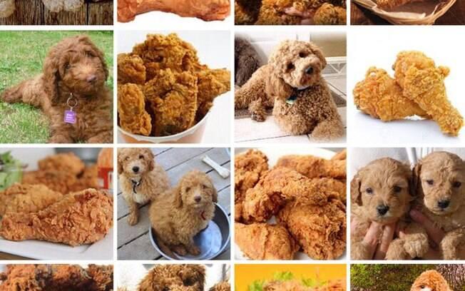 Cachorro ou frango frito