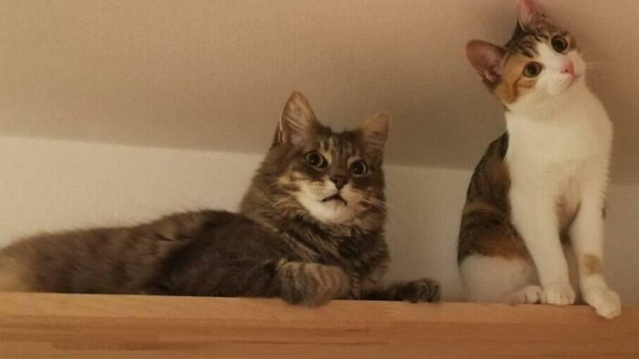 Koba e Lilly, os gatinhos que viralizaram